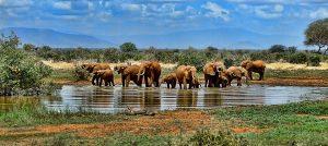 L'Afrique du sud, une belle découverte pour vos voyages touristes.