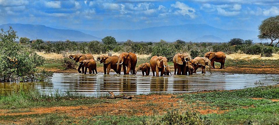 Read more about the article L'Afrique du sud, une belle découverte pour vos voyages touristes.